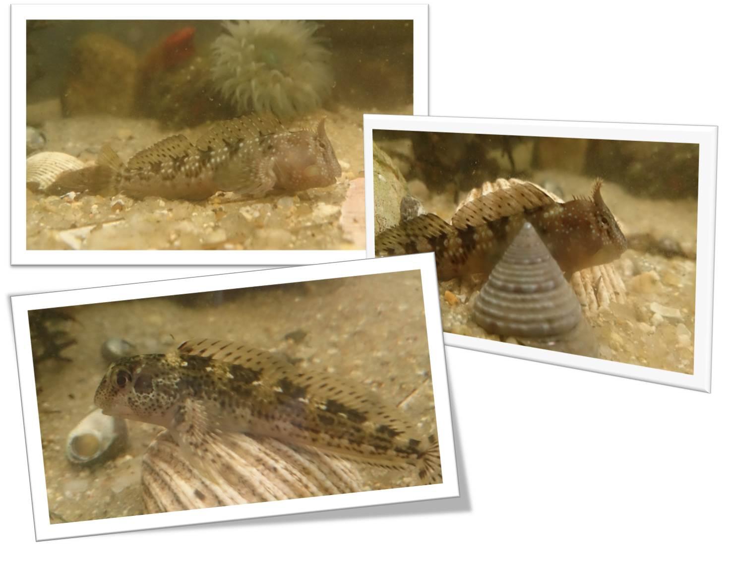 Diario dun acuario